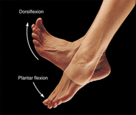 ankle-movement